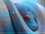 Turquoise Boa Constrictor by ROGUE-RATTLESNAKE