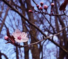 Signs of spring, signs of beauty. by Heavensinyoureyes