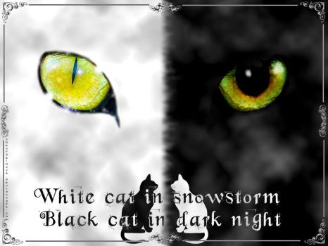 Black Cat White Cat by Coeurdelouve