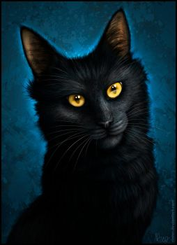 The Black Cat by Rinter