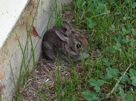 Small Bunny by Fluffer2004