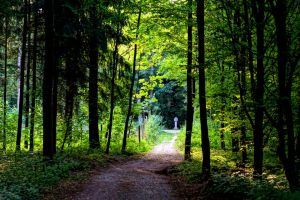 forest path # 2 by Mittelfranke