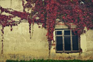 Autumn Vines. by TheRoadNovel