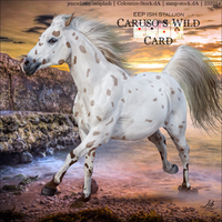 Horse Avatar ~ Caruso's Wild Card by Liberty-Designs