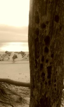 beach tree by AngelHughes