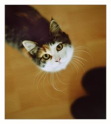 whisker by zuckerfuss