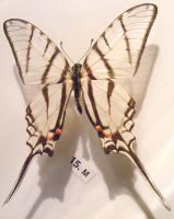 moths and butterflies stock120 by hatestock