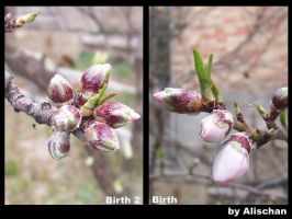 Birth and birth 2 by alischan