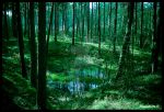 Landscape Forest Green by Dawnevils