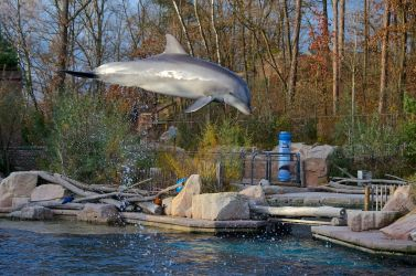 Flying Dolphin by rontz