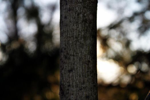 tree bokeh by filthyhandss