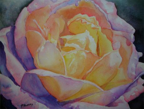 French Rose no. 6 by p-e-a-k