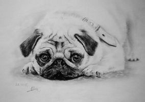 A pug by long-haired-lady