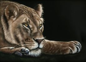 Lioness scratchboard by shonechacko