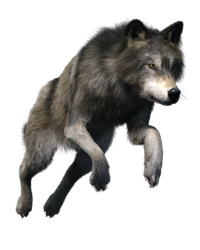 Free stock PNG:  Wolf by ArtReferenceSource