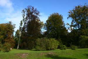 Bunch of trees by CAStock