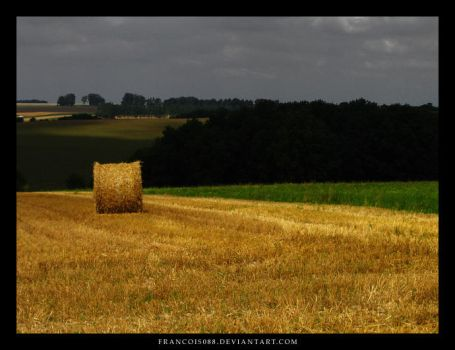 Amazing field by Francois088