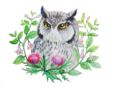 White-faced Scops owl and  thistle by Redilion