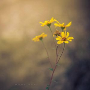 Little wild flowers by Cochalita