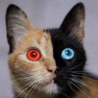 The Two-Faced Cat by miraravenauthor