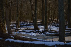 Patuxent Winter Scene by Matthew-Beziat