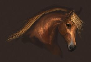 Speed painting - arabian by Elsouille