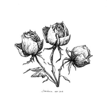 Three wilted roses by dasidaria-art