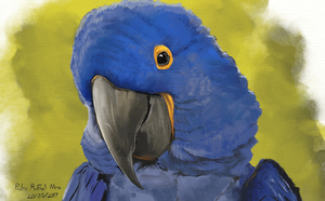 Hyacinth macaw by TheSax66
