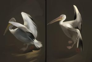 pelicans from the Moscow zoo by GaudiBuendia