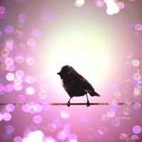 Bird in bokeh by worthyG