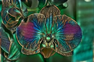 The magical orchid by eReSaW