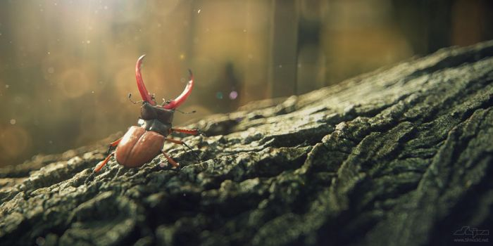 Bug on the wooden bark. by Shiva3d