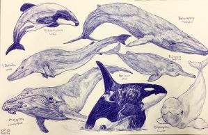 Cetaceans by MickeyRayRex