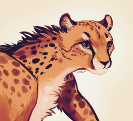 Cheetah { 30ddc } by R0BUTT