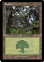 Magic Forest Cumberland Island Photo Card VII by lizking10152011
