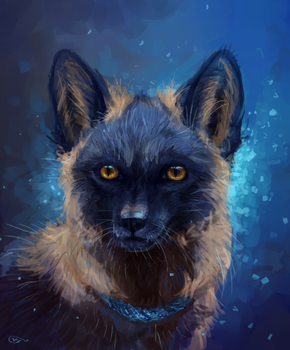 blue fox by AlaxendrA