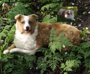 Shelby Red Merle Australian Shepherd Needle felted by WoolArtToys