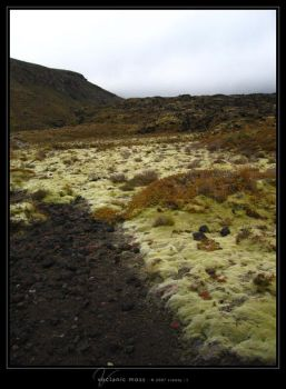 Volcanic Moss by Crooty