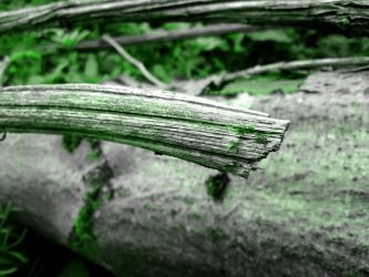 branch by Abios77