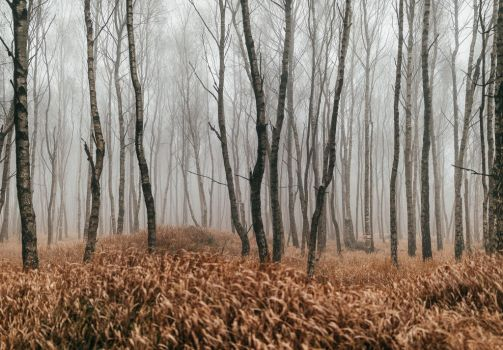 November Woods by Dapicture