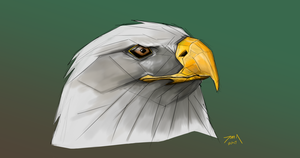 Day 257-Bald Eagle by Dan21Almeida95