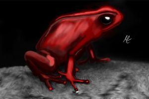Red Frog by KernApfel