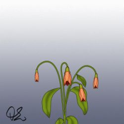 Flower blooming animation - 2 by TheOhToons