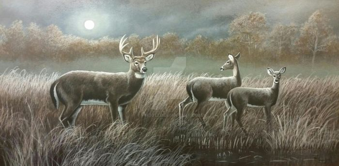 Moon Beams, White tailed Deer by pm3013