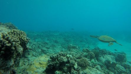 Sea Turtle Landscape by Raulboy
