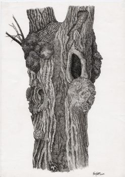 Piece of the Old Oak by Valentina-Mustajarvi
