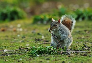 Squirrel 4 by thisable