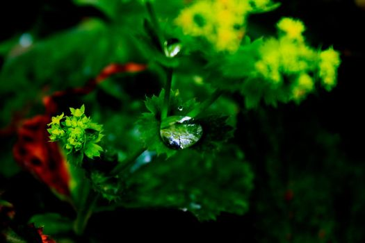 Water drop on the green plant by fedda95