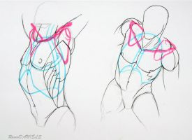 shoulder bone/ rib cage study 3 by RavenDANIELS