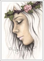 Pale Rose ACEO by Zindy